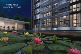 Lilium showflat pool